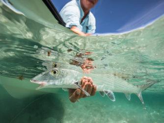 Bonefish release - Bair's Lodge - Bahamas